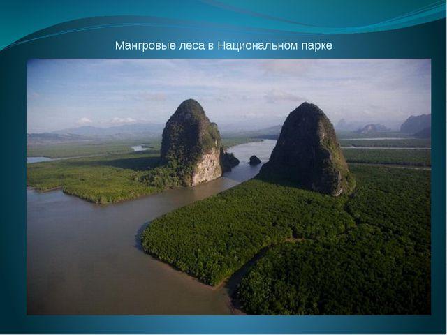 Мангровые леса в Национальном парке Панг Нга, Таиланд.