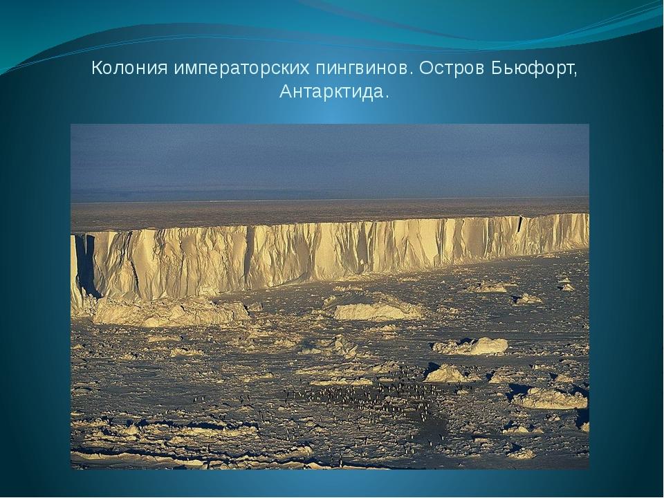 Колония императорских пингвинов. Остров Бьюфорт, Антарктида.