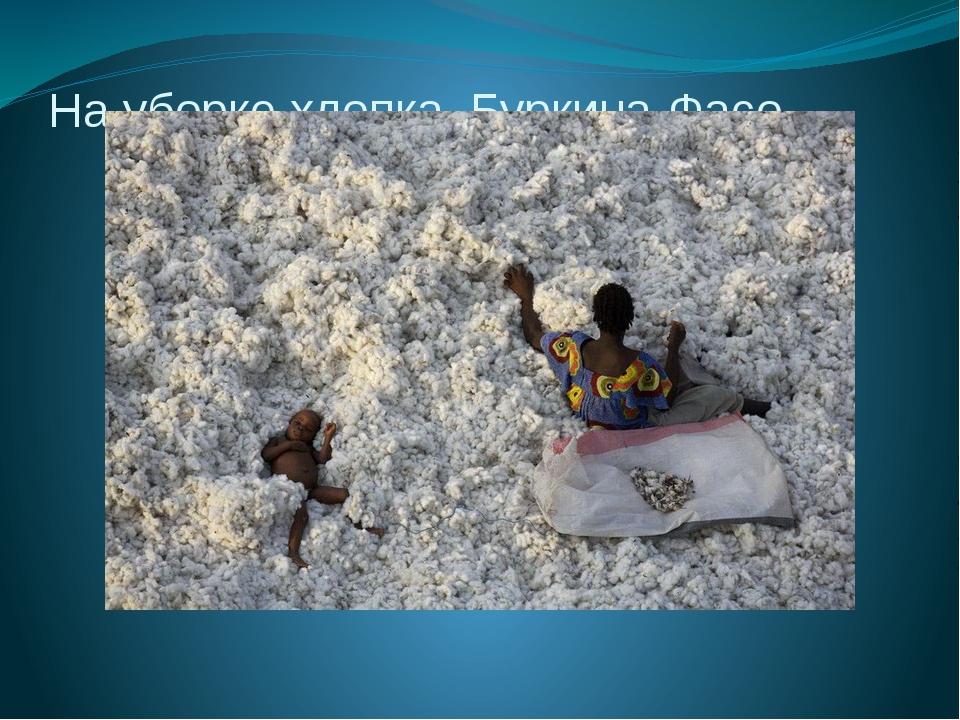 На уборке хлопка. Буркина-Фасо.