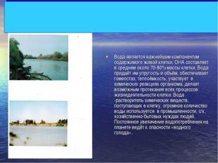 Вода является важнейшим компонентом содержимого живой клетки. ОНА составляет