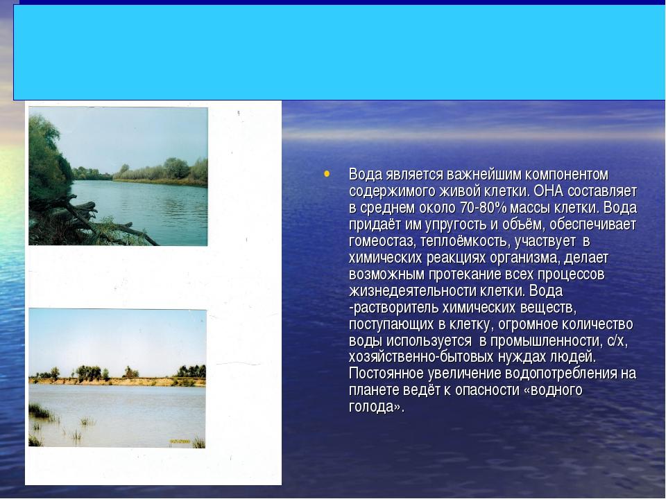 Вода является важнейшим компонентом содержимого живой клетки. ОНА составляет...