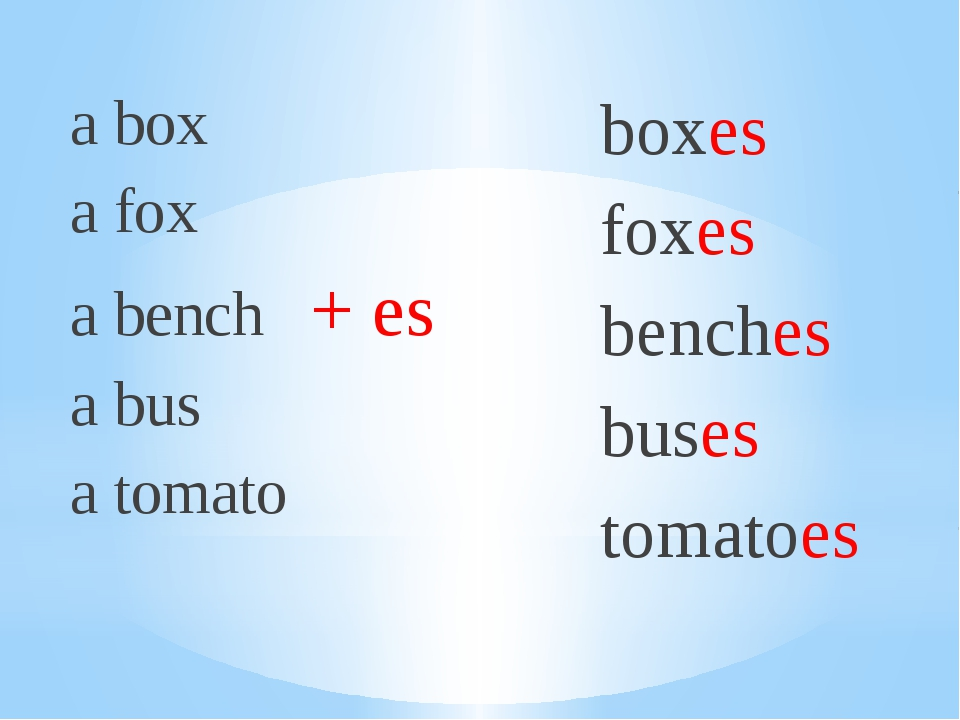 a box a fox a bench + es a bus a tomato boxes foxes benches buses tomatoes