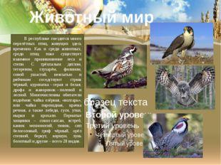 В республике гнездится много перелётных птиц, живущих здесь временно. Как и