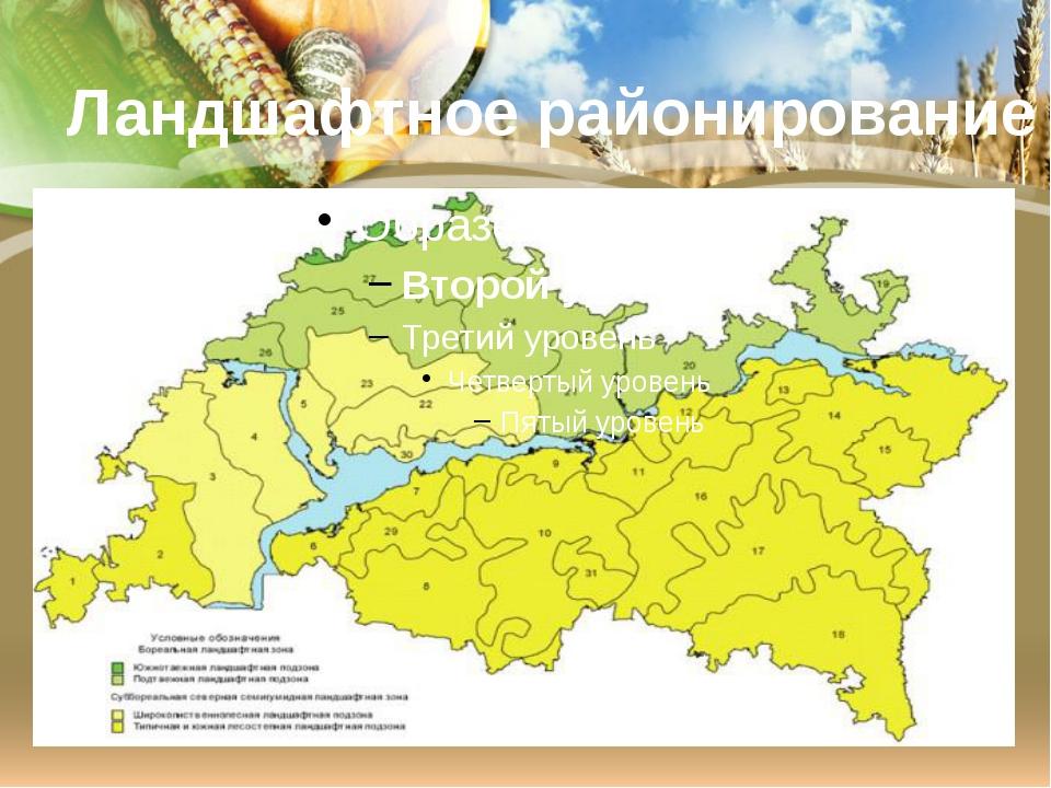Ландшафтное районирование