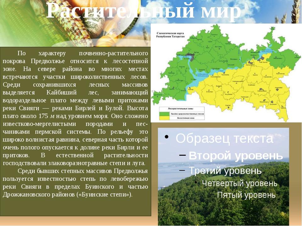 Растительный мир По характеру почвенно-растительного покрова Предволжье относ...