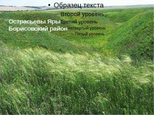 Острасьевы Яры Борисовский район