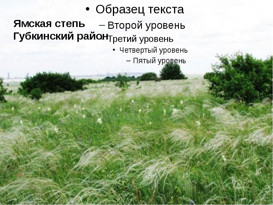 Ямская степь Губкинский район