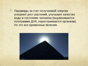 Пирамиды за счет получаемой энергии ускоряют рост растений, улучшают качество