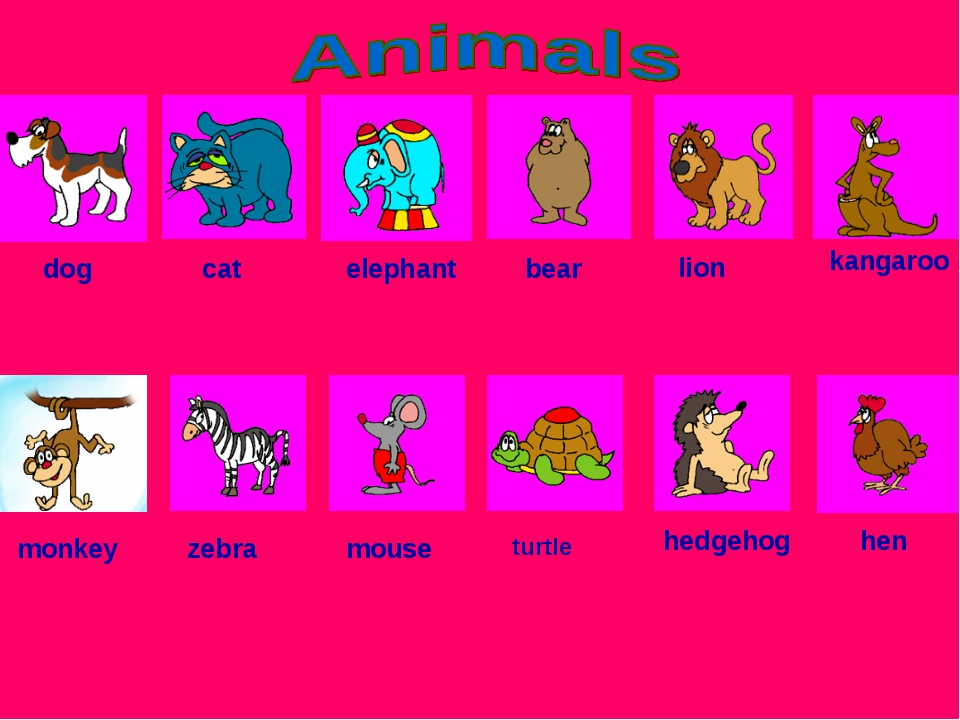 dog cat elephant bear lion kangaroo monkey zebra mouse turtle hedgehog hen
