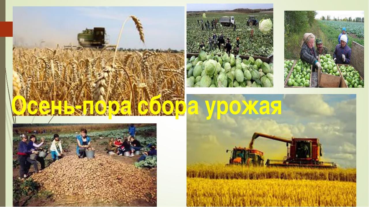 Осень-пора сбора урожая