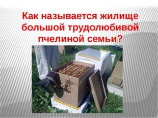 Как называется жилище большой трудолюбивой пчелинойсемьи?