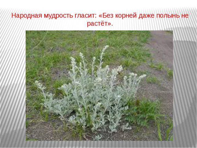 Народная мудрость гласит: «Без корней даже полынь не растёт».