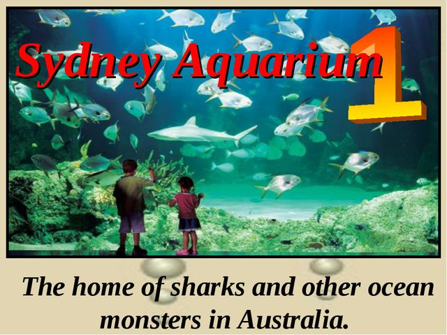 Sydney Aquarium The home of sharks and other ocean monsters in Australia.