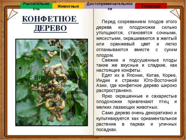 ВЕРНО! ОШИБКА! ОШИБКА! Материки ЕВРАЗИЯ СЕВЕРНАЯ АМЕРИКА АНТАРКТИДА ВОПРОС №5...