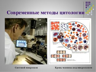Современные методы цитологии Световой микроскоп Кровь человека под микроскопом