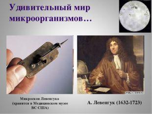 Удивительный мир микроорганизмов… А. Левенгук (1632-1723) Микроскоп Левенгука