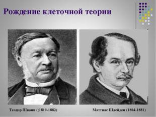 Рождение клеточной теории Теодор Шванн ((1810-1882) Маттиас Шлейден (1804-1881)