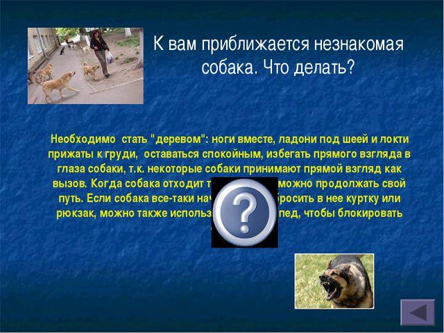 """К вам приближается незнакомая собака. Что делать? Необходимо стать """"деревом"""":..."""