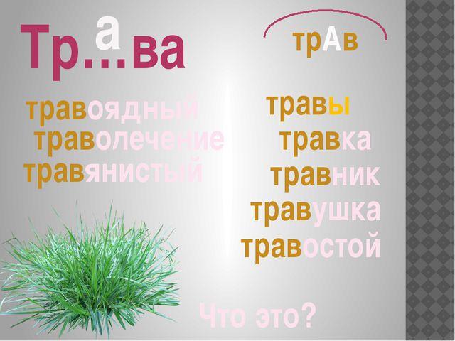 Что это? Тр…ва травник травы травушка травоядный траволечение травянистый тра...