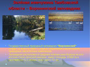 Зелёная жемчужина Тамбовской области – Воронинский заповедник Государственны