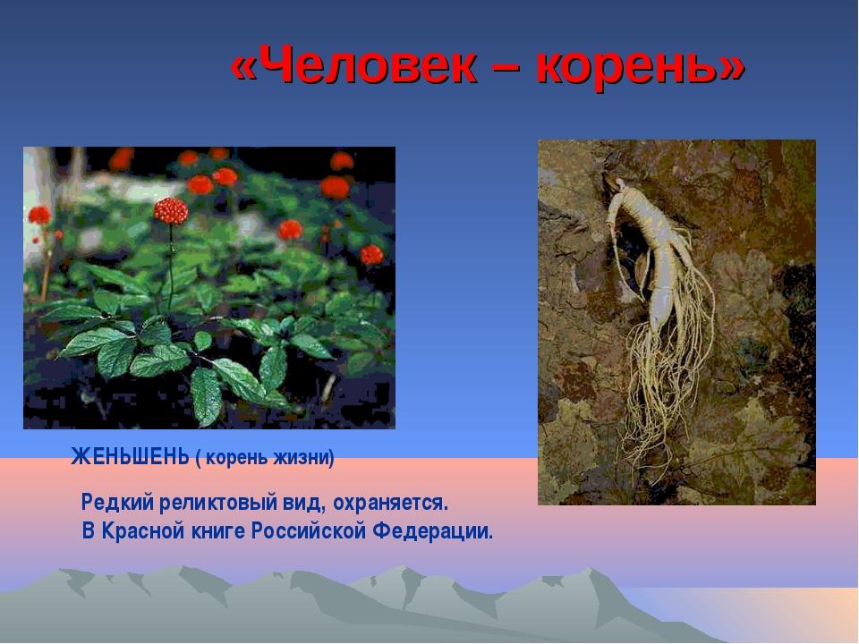 «Человек – корень» ЖЕНЬШЕНЬ ( корень жизни) Редкий реликтовый вид, охраняется...