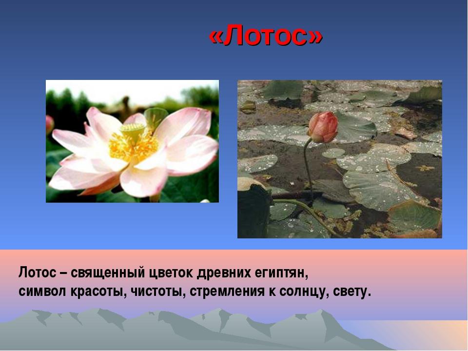 «Лотос» Лотос – священный цветок древних египтян, символ красоты, чистоты, ст...