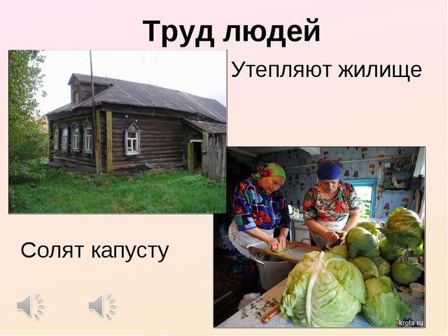 Труд людей Утепляют жилище Солят капусту