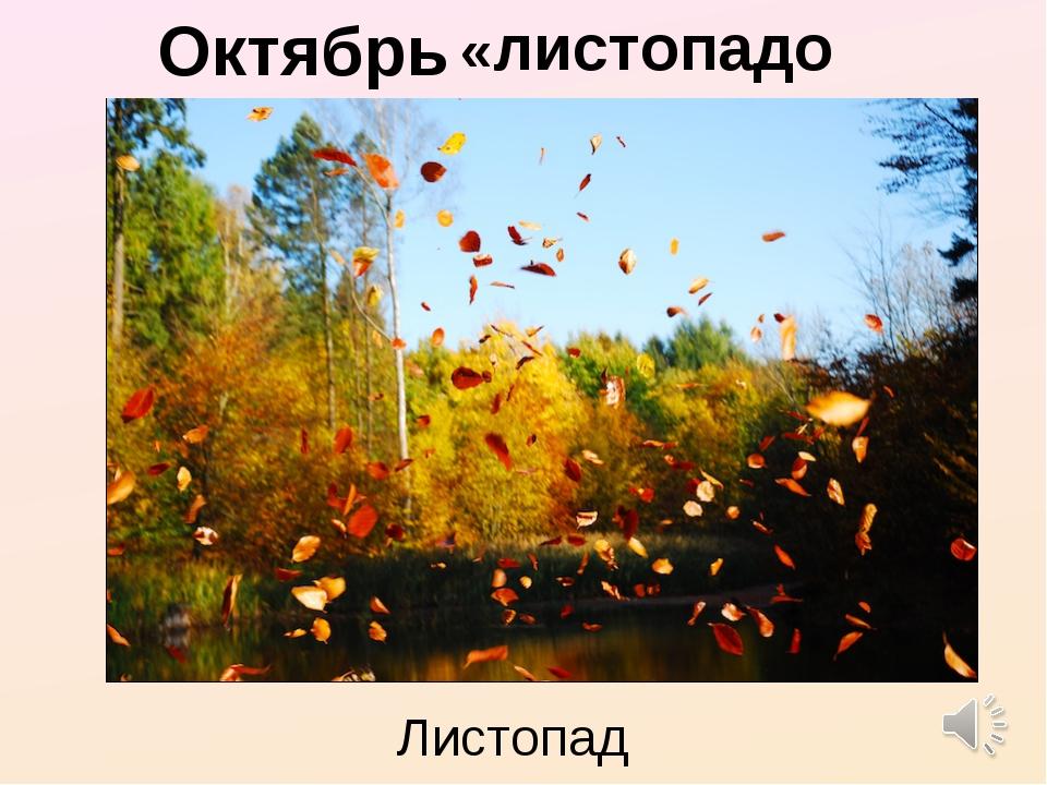 Октябрь - «листопадом» Листопад
