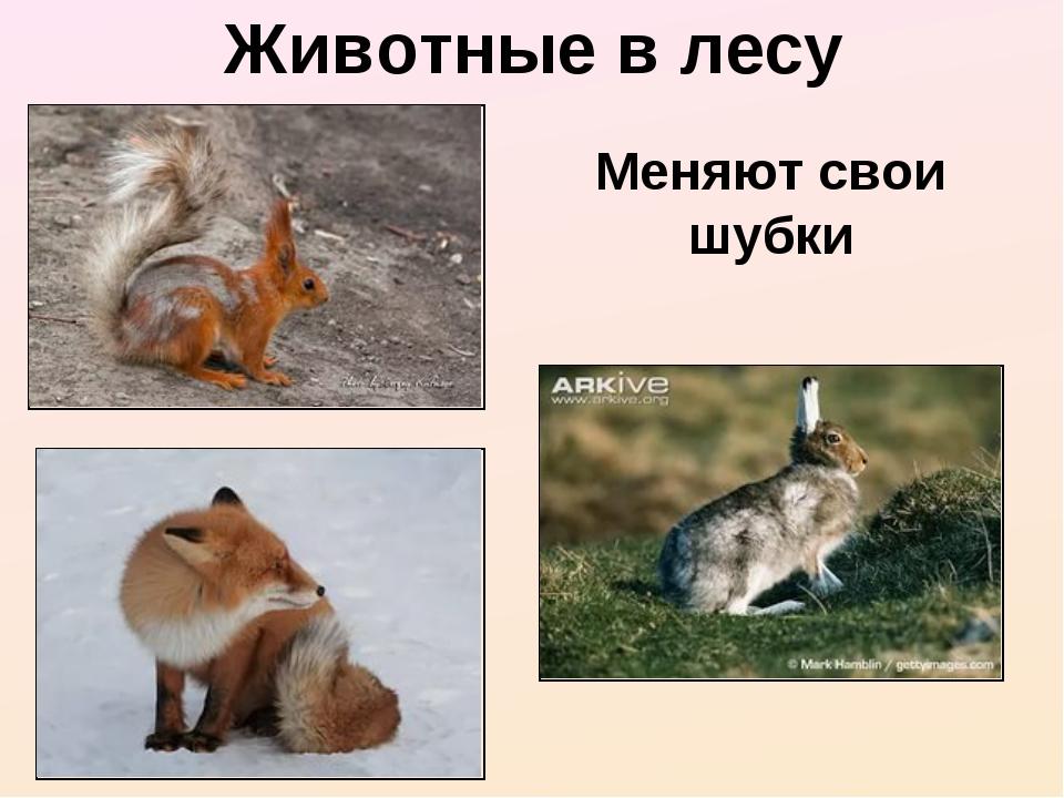 Животные в лесу Меняют свои шубки