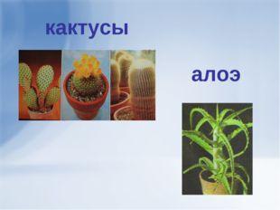 кактусы алоэ