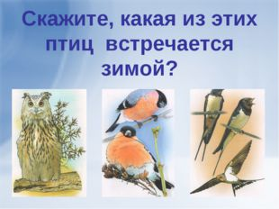 Скажите, какая из этих птиц встречается зимой?