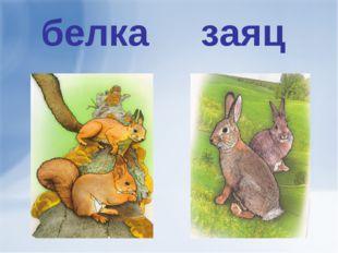 белка заяц