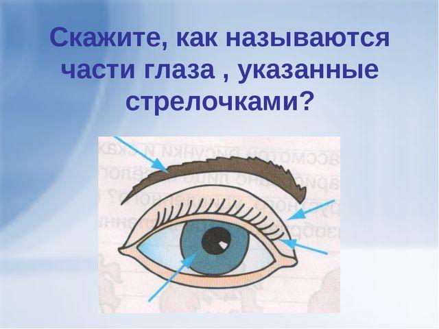 Скажите, как называются части глаза , указанные стрелочками?