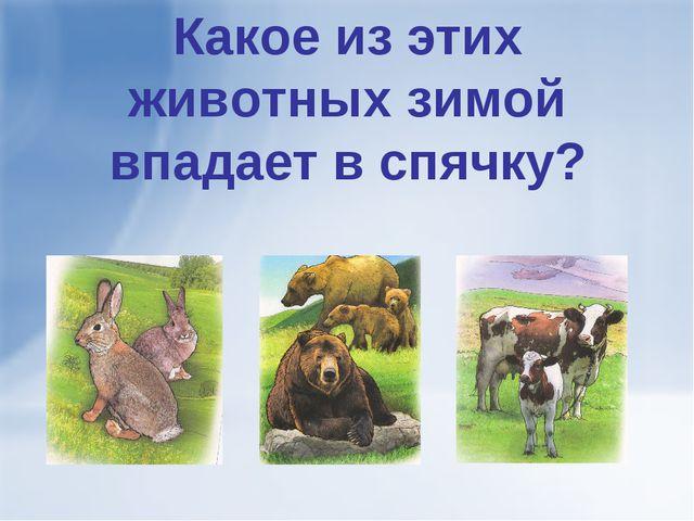 Какое из этих животных зимой впадает в спячку?