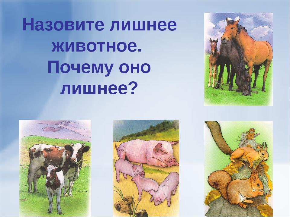 Назовите лишнее животное. Почему оно лишнее?