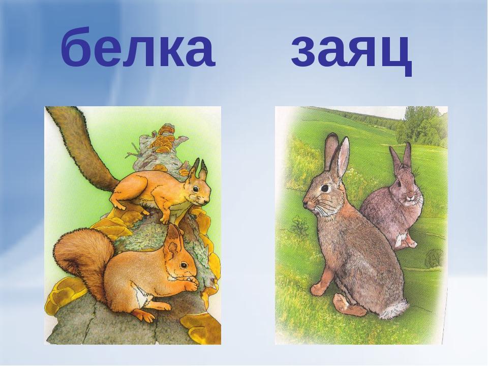 настоящего картинка зайца и белочки профессиональной фотографии дербент