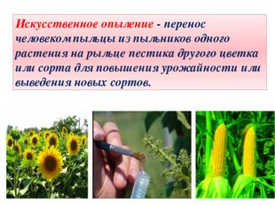 Искусственное опыление - перенос человеком пыльцы из пыльников одного растени