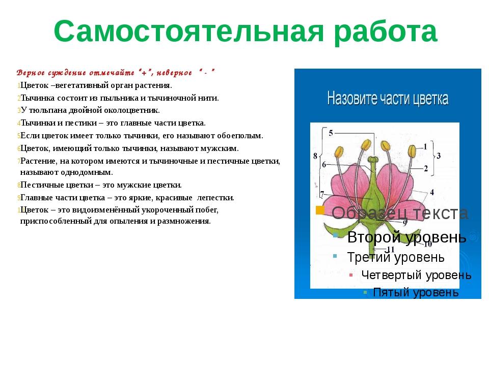 """Самостоятельная работа Верное суждение отмечайте """"+"""", неверное """" - """" Цветок –..."""