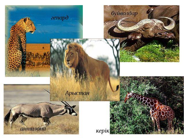 гепард антилопа буйволдар керік Арыстан