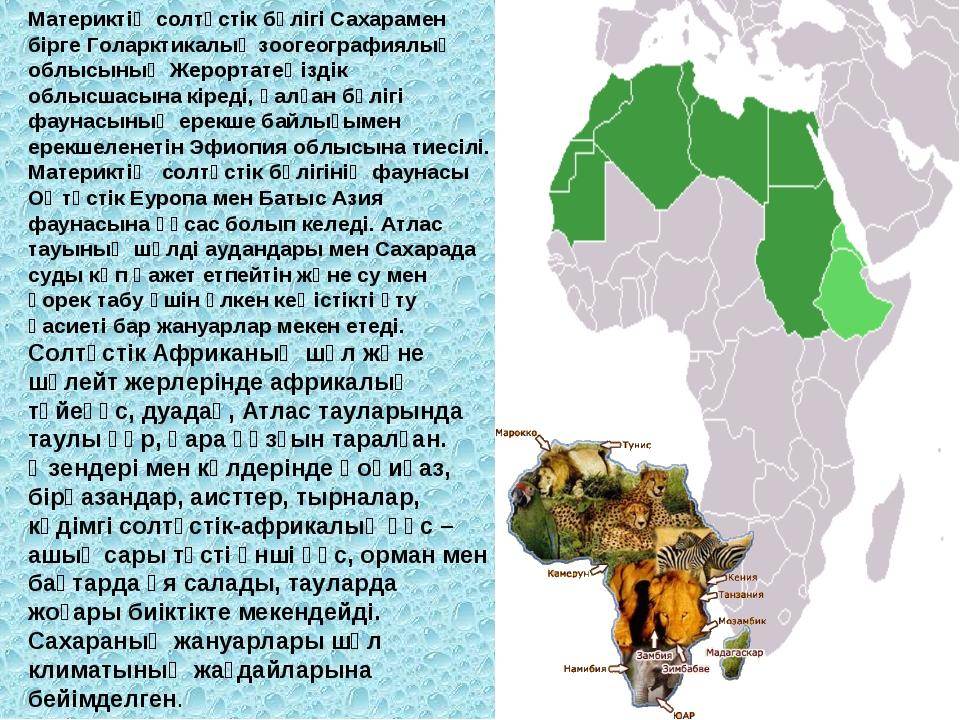 Материктің солтүстік бөлігі Сахарамен бірге Голарктикалық зоогеографиялық обл...