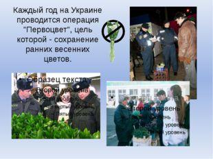 """Каждый год на Украине проводится операция """"Первоцвет"""", цель которой - сохране"""