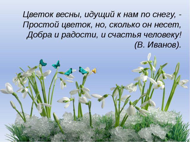 Цветок весны, идущий к нам по снегу, - Простой цветок, но, сколько он несет,...