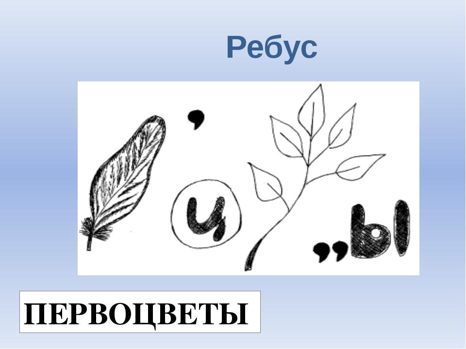 Ребус ПЕРВОЦВЕТЫ