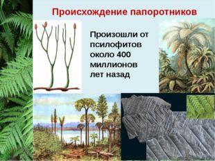 Происхождение папоротников Произошли от псилофитов около 400 миллионов лет на
