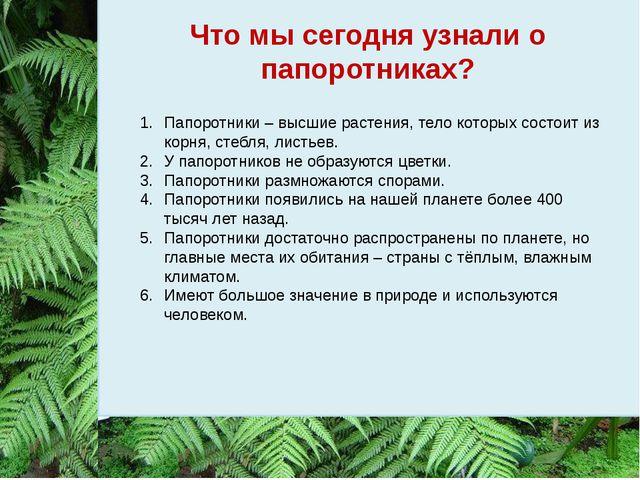 Что мы сегодня узнали о папоротниках? Папоротники – высшие растения, тело кот...
