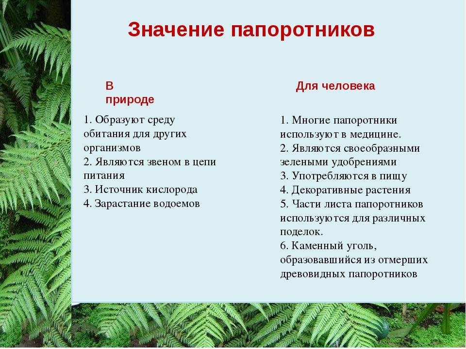 Значение папоротников 1. Образуют среду обитания для других организмов 2. Явл...