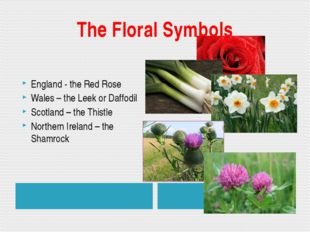 The Floral Symbols England - the Red Rose Wales – the Leek or Daffodil Scotla