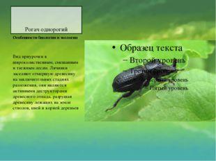 Рогач однорогий Особенности биологии и экологии Вид приурочен к широколиствен