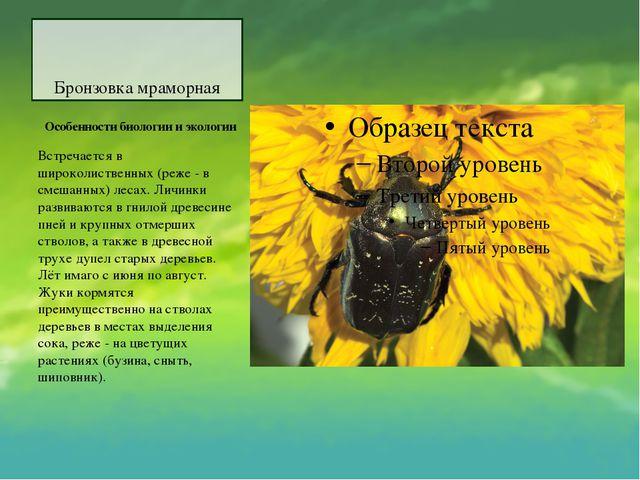 Бронзовка мраморная Особенности биологии и экологии Встречается в широколис...