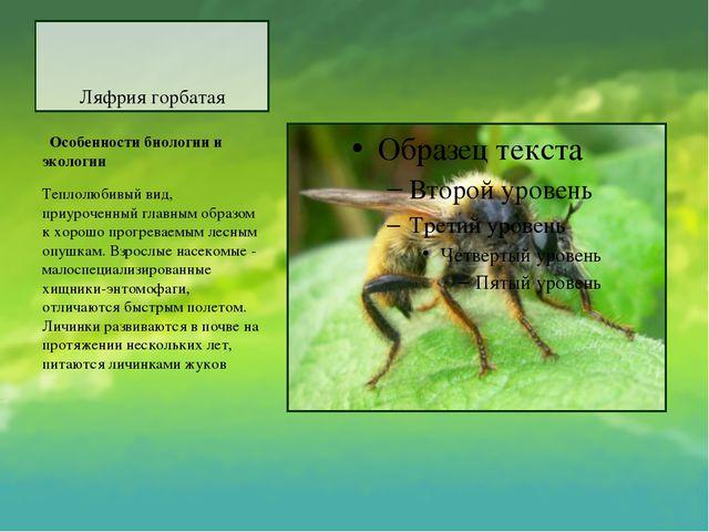 Ляфрия горбатая Особенности биологии и экологии Теплолюбивый вид, приурочен...